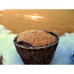 Yerli Tohum Karakılçık Buğdayı